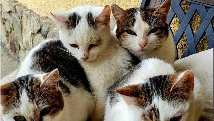"""Vilaller impulsarà el model de """"Colònies controlades de gats de carrer"""""""