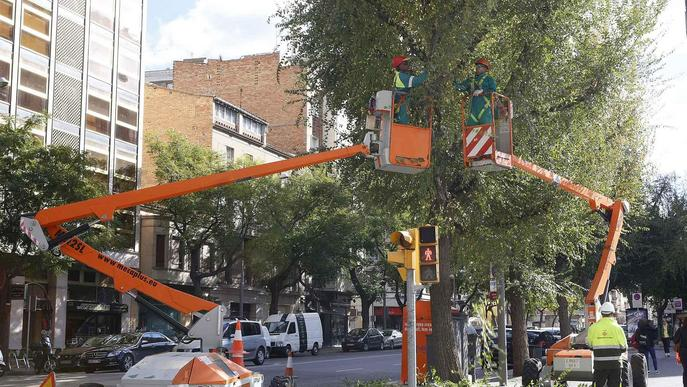 La Paeria realitza treballs d'esporga en prop de 15.000 arbres a Lleida