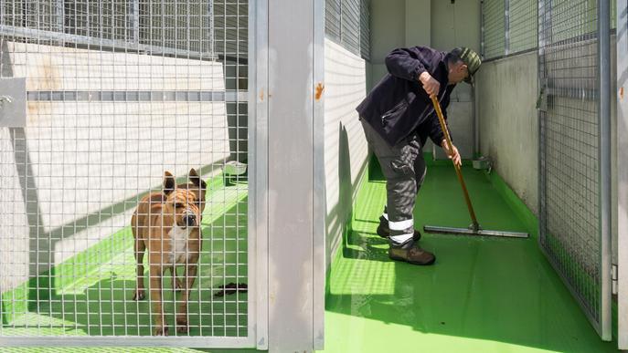 Convenis entre la Paeria i tres entitats animalistes per fomentar les adopcions del CAAC