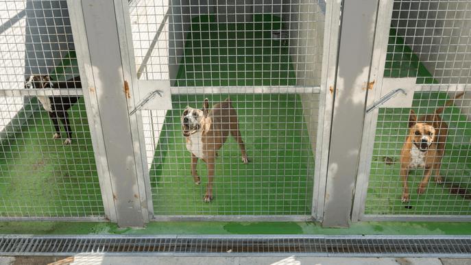 La Paeria de Lleida signa convenis amb tres entitats animalistes per fomentar les adopcions del CAAC