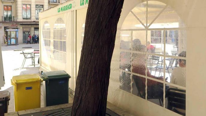 Adéu a un arbre de més de 50 anys a la plaça Sant Joan per seguretat