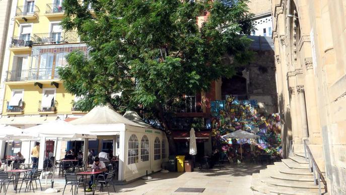 ⏯️ El portaveu d'Ipcena puja a l'arbre que la Paeria vol talar a la plaça Sant Joan