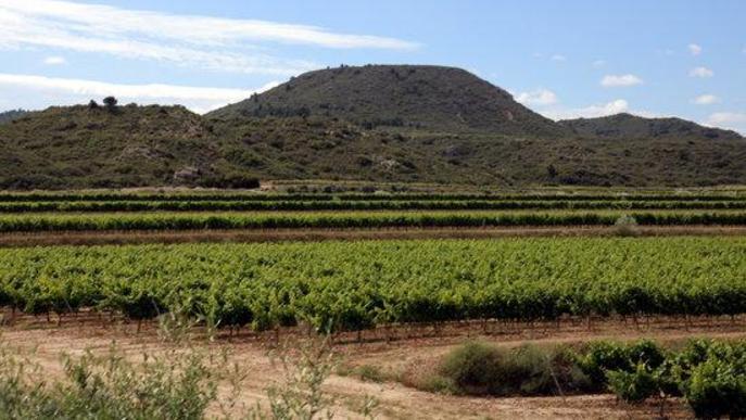 Les Garrigues i la Ribera d'Ebre i l'Anoia escollides per a un projecte pilot internacional de Turisme