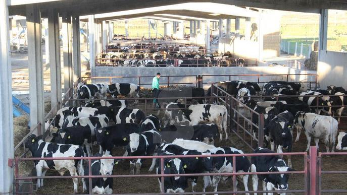 Jordà destaca els controls higiènics i sanitaris en la venda de llet crua