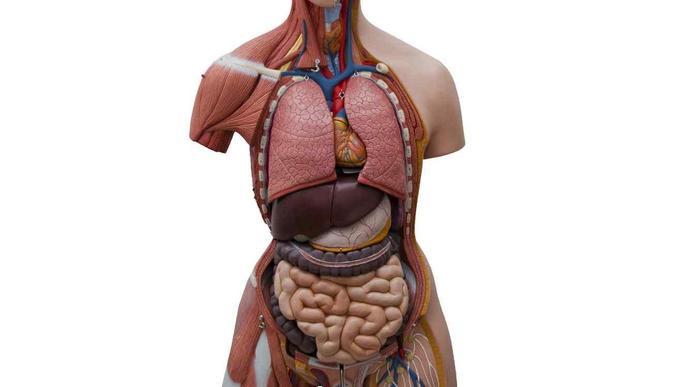 Què ens frena a ser donants d'òrgans?