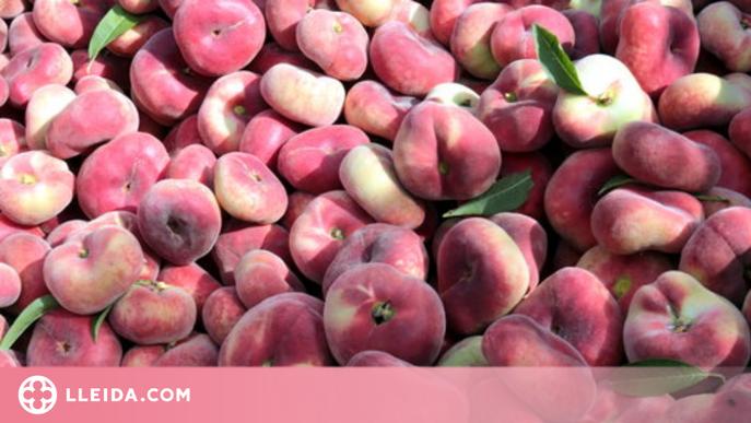 Catalunya preveu una caiguda en la producció de préssec i nectarina per les gelades d'aquesta primavera