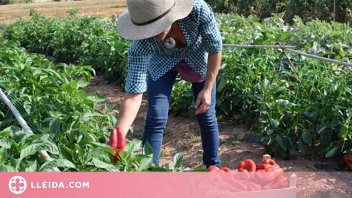 Dones Rurals: Amb força i emprenedoria fan de l'entorn casa seva... Elles, tot un exemple que sí que es pot