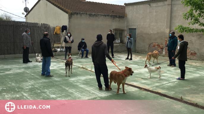 Persones sense llar eduquen gossos del Refugi dels Peluts de Lleida