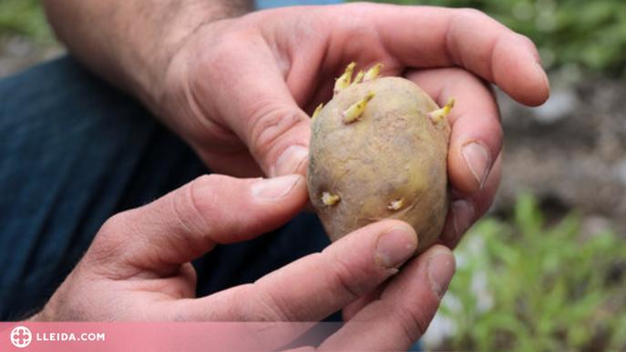 ⏯️ Horts voluntaris al Pallars Sobirà i l'Alt Urgell per recuperar i conservar varietats tradicionals