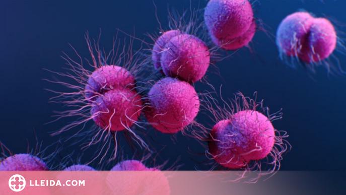 Els bacteris superresistents de les plantes de tractament d'aigües residuals són una amenaça mundial