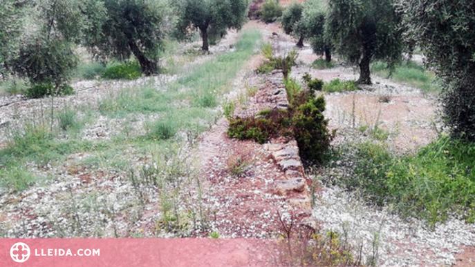 Les pedregades d'aquest dissabte deixen danys en cultius de les Garrigues i l'Urgell