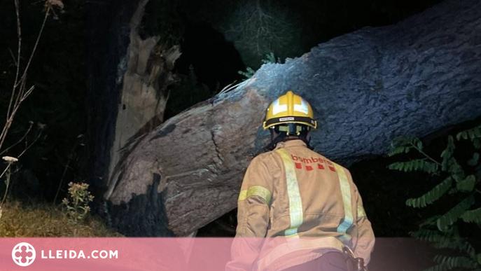 Un incendi per un llamp i més de 40 caigudes d'arbres durant la tempesta als Pirineus