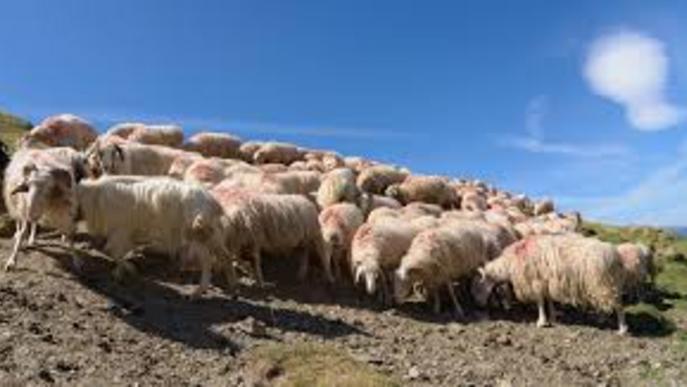 Asaja reclama mesures per ajudar els ramaders davant la crisi del coronavirus