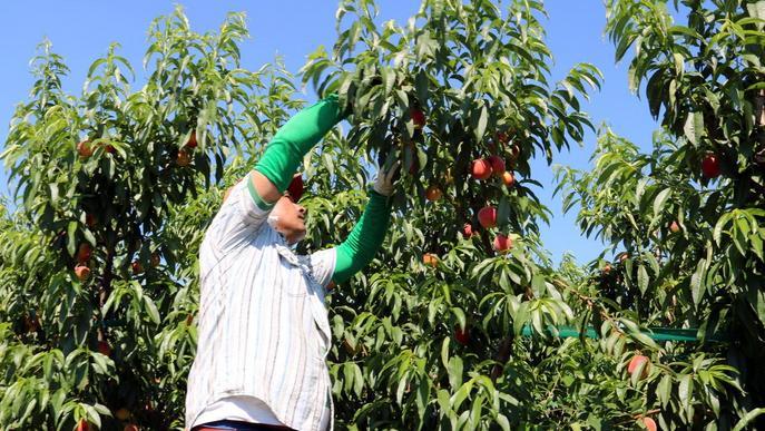 L'Estat redueix els mòduls de l'IRPF als pagesos i ramaders afectats per la sequera i els aiguats