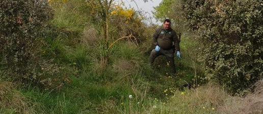 Denuncien un veí de Balaguer amo d'un llebrer mort a cops