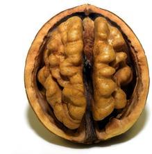 Psiconeuronutrició, el concepte psicológic de l'alimentació