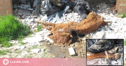 Troben el cadàver d'un cavall en una nau abandonada de Lleida