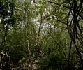 12, Edgar dos Santos, L'home del bosc